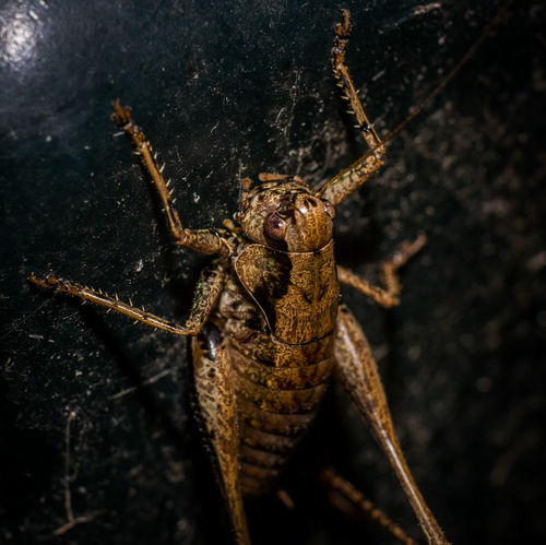 Animal Themes Animal Wildlife Animals In The Wild Bush Cricket Close-up Cricket Day Insect Insects  Nature No People One Animal Outdoors Six Legs Spider