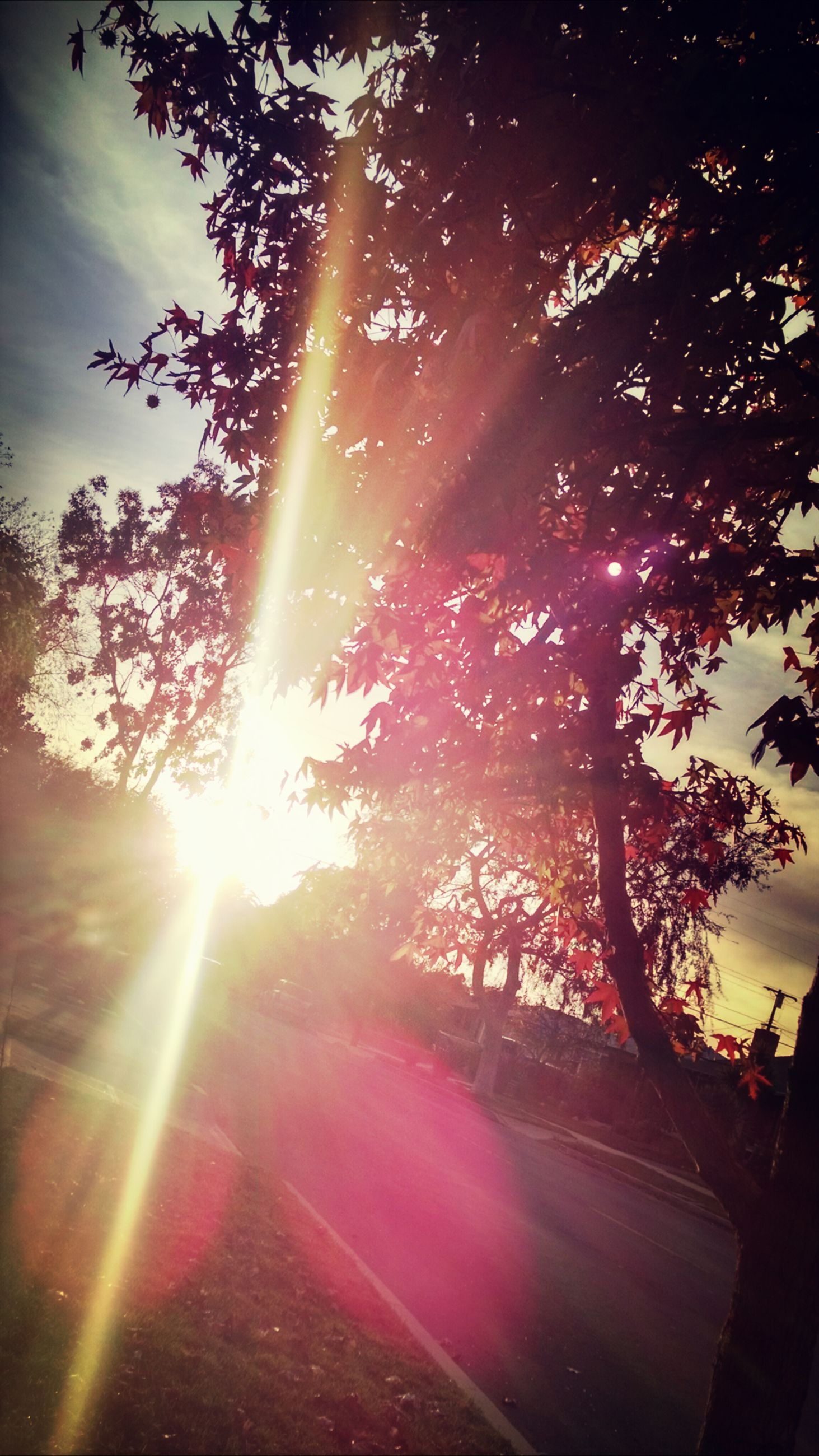 sun, sunbeam, tree, lens flare, sunlight, sky, tranquility, bright, beauty in nature, nature, tranquil scene, back lit, scenics, growth, sunny, low angle view, sunset, streaming, silhouette, shining
