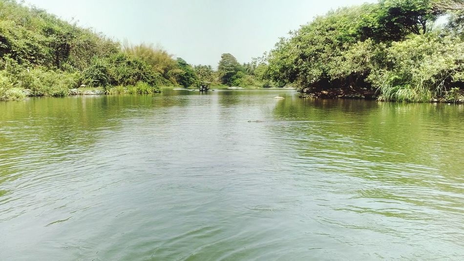 Water Nature Tree Outdoors Bird Sactuary Crocodile Park No People Lake Day Tranquility Beauty In Nature Scenics Sky