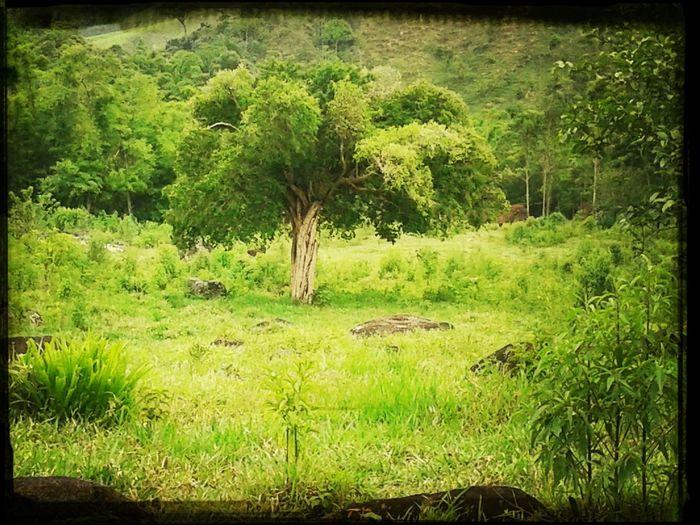Tree Green.
