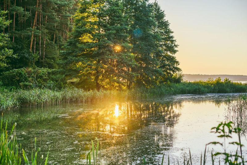 Sunlight Lietuva Lithuania Lithuania Nature Nature Sunlight Water Reflections Beauty In Nature Forest Growth Idyllic Lake Nature No People Non-urban Scene Outdoors Plant Reflection Scenics - Nature Sky Sunset Tranquil Scene Tranquility Tree Water Waterfront