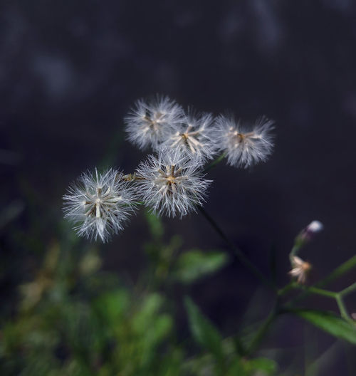Close-up Grass Flowers Soft Focus Soft Light Soft Colors  Soft Beauty Soft Tones Moodygrams Moody Nature Moody Tones Beauty In Nature Nature Photography Nature_collection Soft Flowers Dreamy Beauty Flower Head Flower Uncultivated Softness Close-up Plant Sky