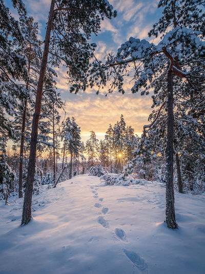 Scenic winter landscape with forest, sunrise and footprints at morning time in Finland Snow Cold Temperature Winter Tree Tranquility Beauty In Nature Tranquil Scene Sky No People Covering Nature Environment Scenics - Nature Finland Landscape Nature Sunrise FootPrint WoodLand Travel Dawn Tranquility Atmospheric Mood Season  Christmas