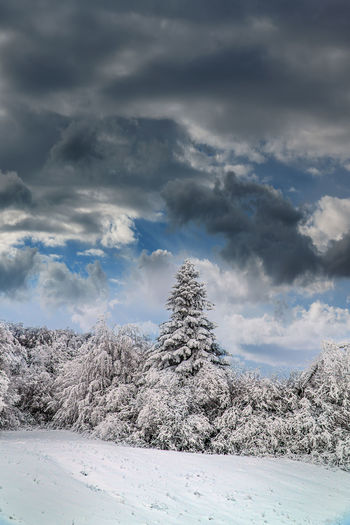 Snow Cloud -