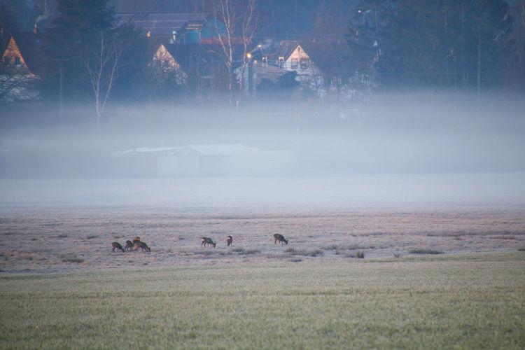 Flock of birds on field during winter