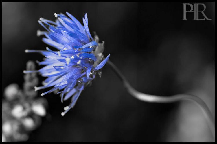 Eyeem Colorkey Color Key Nature_collection Flowerporn
