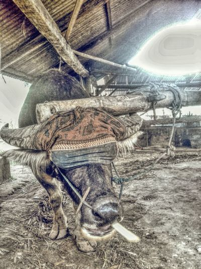 Buffalo soldier First Eyeem Photo