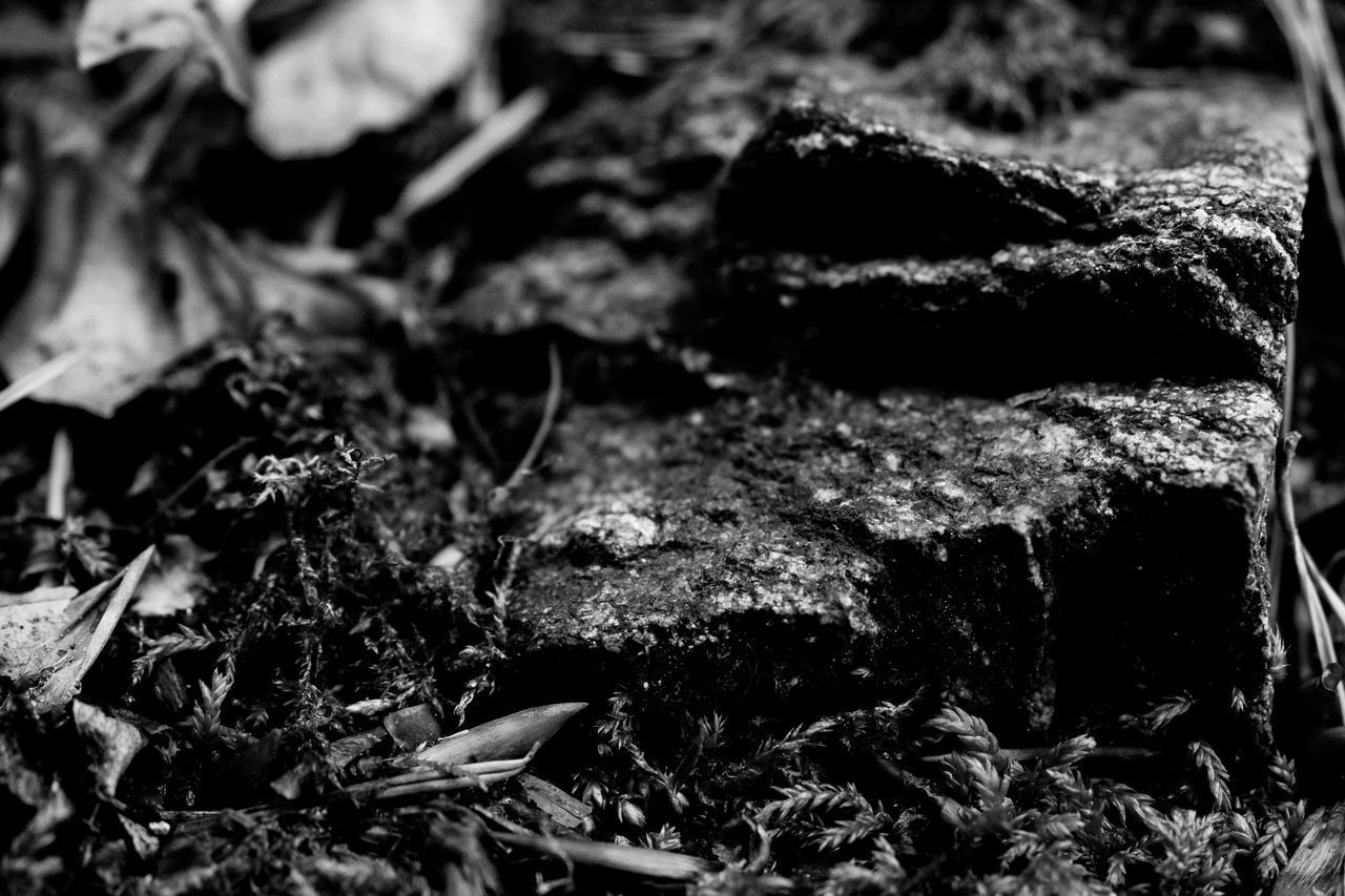no people, selective focus, close-up, nature, full frame, textured, growth, day, backgrounds, plant, outdoors, field, rock, food, plant part, land, leaf, rock - object, solid, vegetable