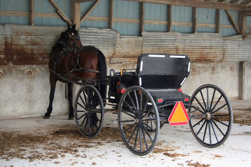 Horse And Buggy ~ Animal Themes Buggy Carriage Ride Day Domestic Animals Getting Around Horse Horse Life Horse Manure Mennonite One Animal Stationary Transportation