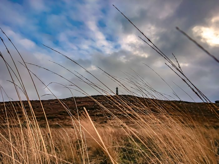 Grass and mountains Sky And Clouds Heath Heather Grass Ruralscapes Rural Scenes Rural Landscape Agricultural Land Landscape_Collection Landscape_photography Sky Cloud - Sky Nature Outdoors Cable Field No People Growth Rural Scene Day Agriculture