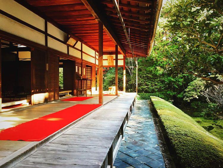 桂春院 妙心寺塔頭 妙心寺 京都 Kyoto, Japan Kyoto Autumn Colors Travel Destinations Kyoto Autumn Japanese Garden Relaxing Autumn Enjoying Life Hello World 紅葉 Autumn Leaves