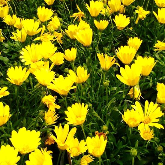 Flower Yellow Close-up Freshness Paint The Town Yellow
