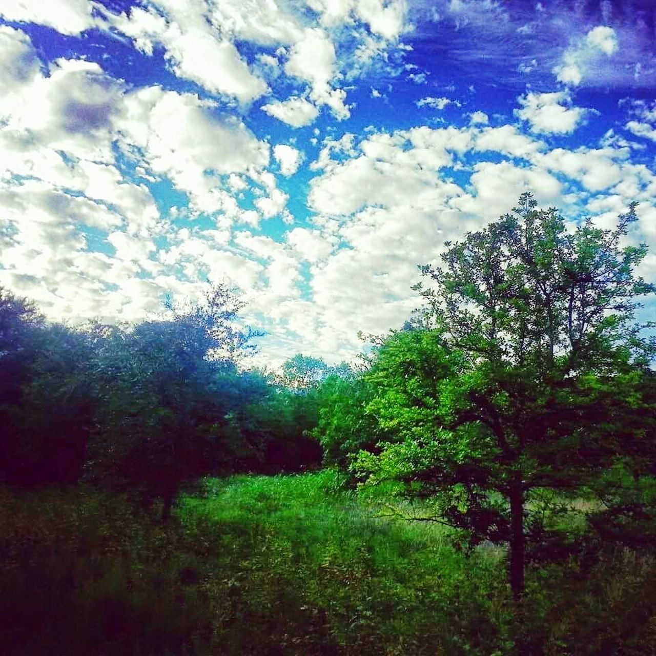 nature, beauty in nature, tree, tranquility, day, sky, growth, scenics, no people, tranquil scene, outdoors, cloud - sky, landscape, plant