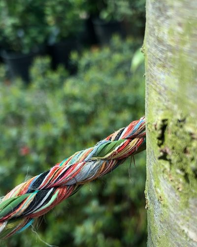 Focus On Foreground Day Close-up No People Plant Nature One Animal Tree Rope Outdoors Plant Part Sunlight Green Color