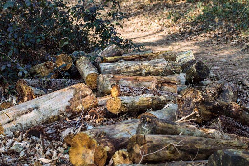 Cutwood WoodLand Woods Forest Deforestation Woodbury WoodburyCommon