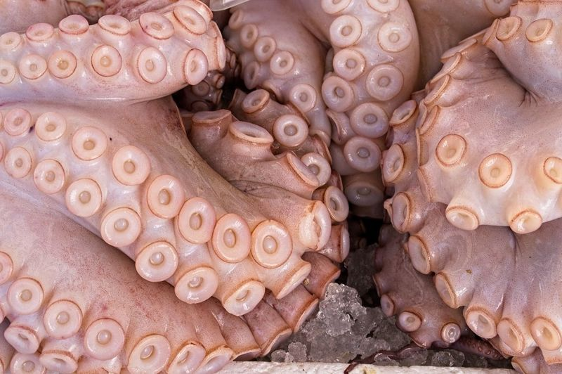 Raw food, suckers and tentacles of the octopus, piovra Animal No People Full Frame Close-up Animal Themes One Animal Octopus Backgrounds Animal Wildlife Market Animals In The Wild Day History Sea Raw Food Sea Life Marine Vertebrate Outdoors Piovra Tentacles Seafood