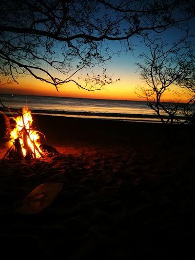Fuego en la tierra, fuego en el mar Playa Sensaciones Felicidad Momentos Atardecer Costa Rica Tree Water Sea Sunset Beach Branch Clear Sky Silhouette Winter Sky