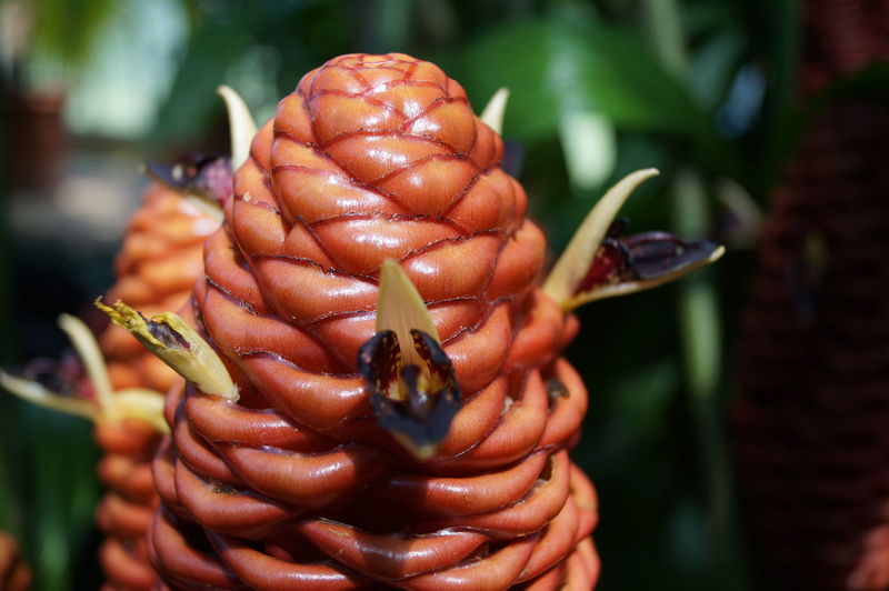 Flowers 🌸🌸🌸 Kew Gardens Royal Botanic Gardens London Macro Photography Macro_collection
