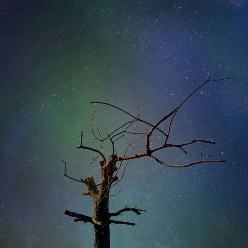 Night Bare Tree Nature Star - Space Tree Beauty In Nature Low Angle View Outdoors No People Tranquility Sky Branch Scenics Astronomy Water Galaxy