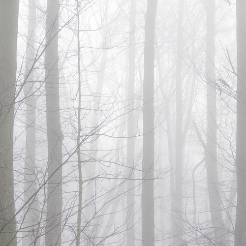 Abstract Photography Abstract Nature Abstract Abstract Art Beauty In Nature Branch Day Fog Forest Landscape Nature No People Outdoors Tree