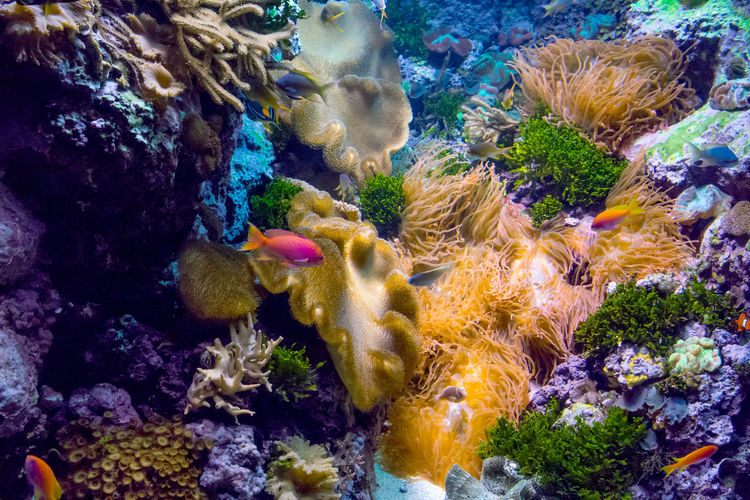 beautiful and colorful fish swim in coral and living rock in a underwater sea world Fish Species Swimming Tropical Fish Anenomeshrimp Animal Animal Themes Animals In The Wild Beauty In Nature Colorful Coral Fish Fishing Flowers Invertebrate Live Rock Marine Nature Saltwater Aquarium Sea Sea Life Swimming UnderSea Underwater Vertebrate Water The Great Outdoors - 2018 EyeEm Awards