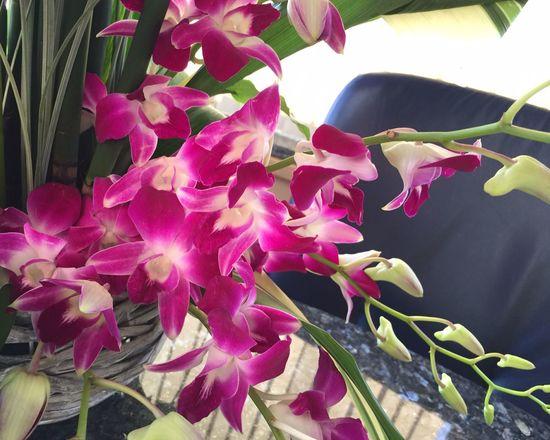 Flowers Beautiful Surroundings