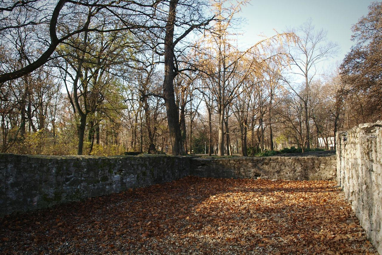 autumn, tree, bare tree, day, outdoors, no people, leaf, tranquility, nature, change, branch, architecture, beauty in nature, sky