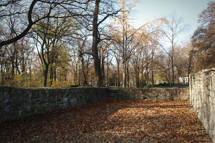Autumn Trees Margaret Island City Park Shadows No People Stone Wall Ruined Building Stone Convent Ruins Budapest Outdoors Morning Light Travel Destinations Island Leaves Sunlight Growth Nature Travel Tourism Sky Branch Beauty In Nature