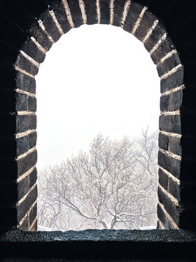 View of bare tree against clear sky seen through window