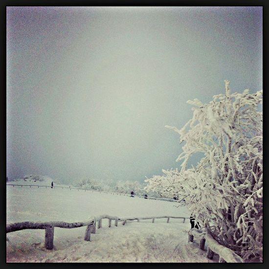 It's my way Snow