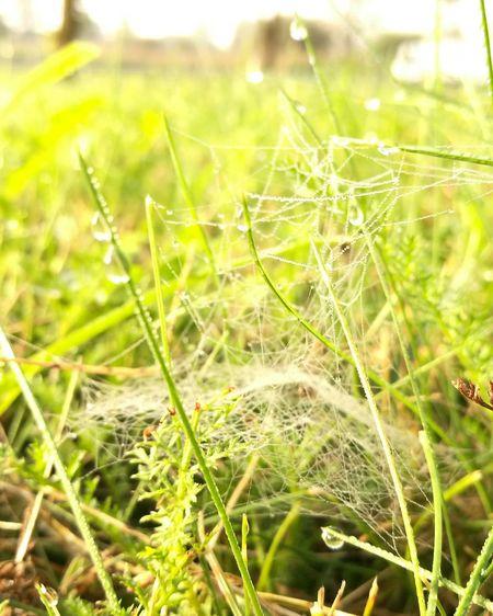 Autumn Autumn Morning паутина Осень 🍁🍂 осеннеенастроение осень прекрасна 🌾🍂🍃 осеньвгороде Nature Green Color Grass Water Drop