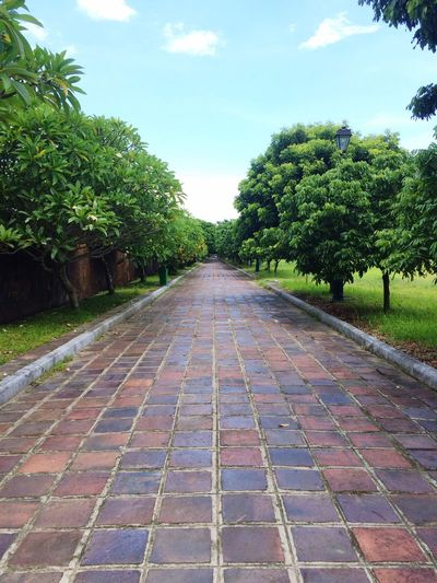 Ảo=)) Hue2017 Tree Long Road The Way Forward Old Beautiful Instruction Temple Beauty In Nature Landscape Vietnam Through My Cam 🙈❤️