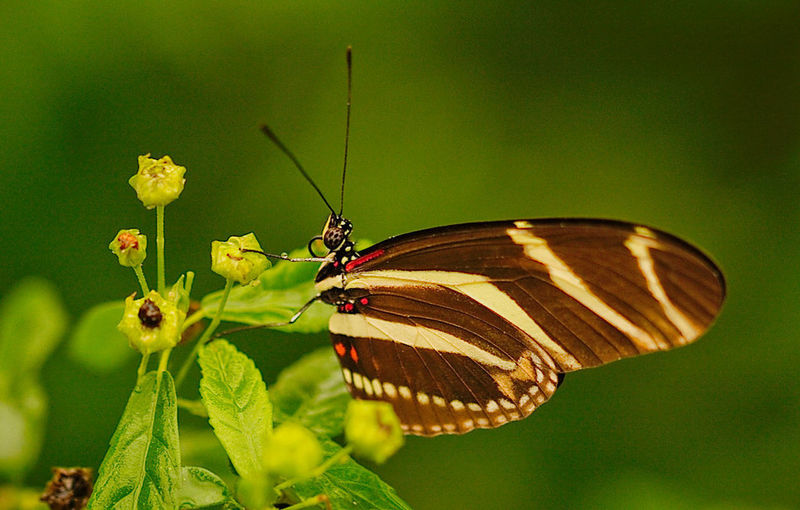Animal Themes Animal Wildlife Animals In The Wild Beauty In Nature Butterfly Butterfly - Insect Close-up Day Freshness Insect Leaf Nature No People One Animal Outdoors Plant