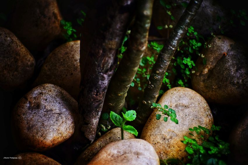 Clicked On Nikon D3300 Stones Green Color Wet Close-up Growing Young Plant Plant Life Rainy Season