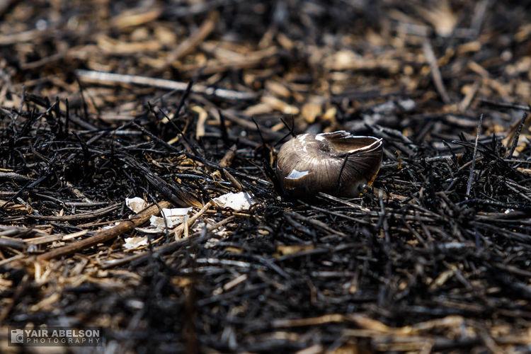 Aftermath Smoke