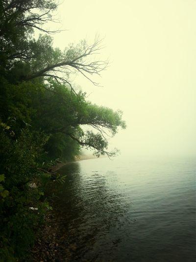 Shoreline Milwaukee Nature Underdogs_nature Nature Lover