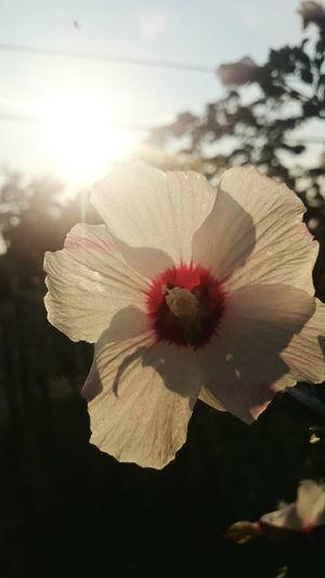 Sony Z2 Photography Human Meets Technology Nature Toronto Flower Sunshine Makes Everything Better The City Light