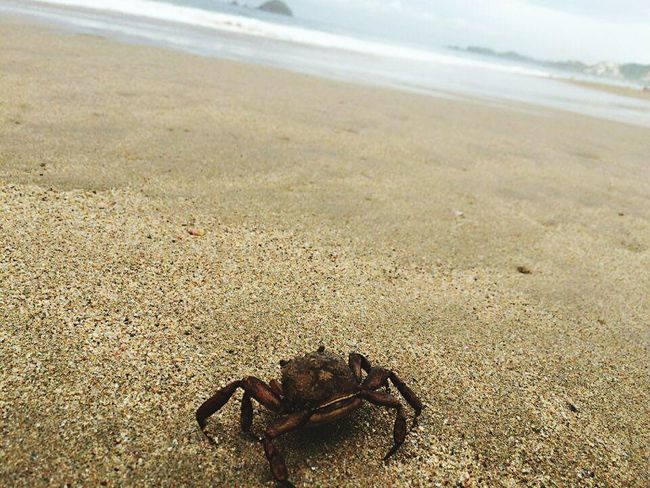 Crab Beach Playa Hello World EyeEm Best Shots Summertime Funny Moments Coincidence Keep Calm And Take A Picture Crabs!! Beauty In Nature Beautiful That's Me Nature_collection Always Taking Photos Ixtapa Enjoying Life Love Photography Amazing Nature