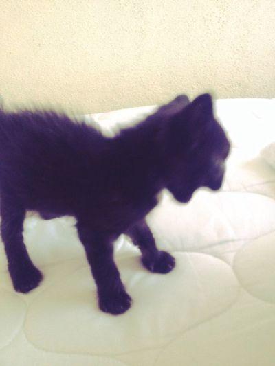 Pıtırcık Babycat ❤ Smile