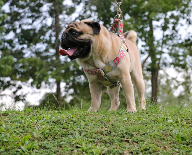 Pets Dog Panting Tree Sticking Out Tongue Grass