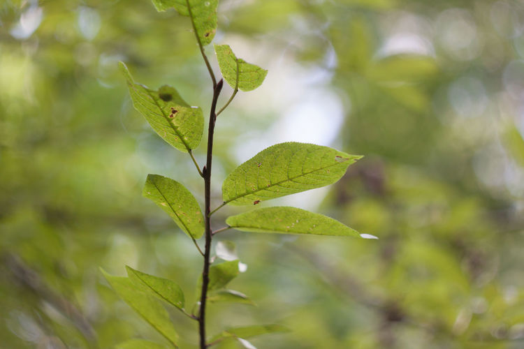 Tree leaves Beauty In Nature Close-up Day Green Color Growth Leaf Nature Outdoors Plant Tree Leaves Trees