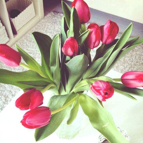 Flowers Flower Tulip Tulips
