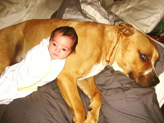 Big Puppie 8Months Young ❤Our Babygirl 7days Young ❤ My Paradise ❤ Cute Puppies Cute Babies I Love My Pittbull ❤ Pitbull Lover Dogoftheday I Love My Dog❤ I Love My Dog Pitbull♥ Pittbulls Real People My Big Puppy I Love My Dog ❤Bliss❤ So In Love <3 My Pittys❤