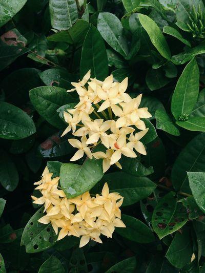 Yellow flowers Yellow Flower Morning