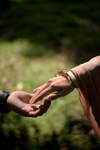Close-up of hand holding hands with beautiful butterfly