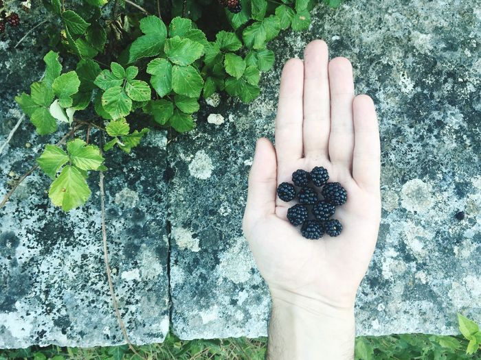 Cropped hand of man with blackberries over paving stones
