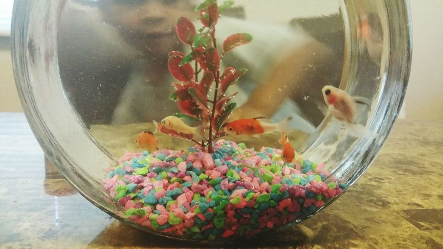 The simple things... Fish Check This Out Eye Em Best Shots EyeEm Gallery Fish Bowl Water Pebbles Bubbles Cute Pet Photography  EyeEm Best Shots EyeEm Awards 2016 Reflection Reflection_collection
