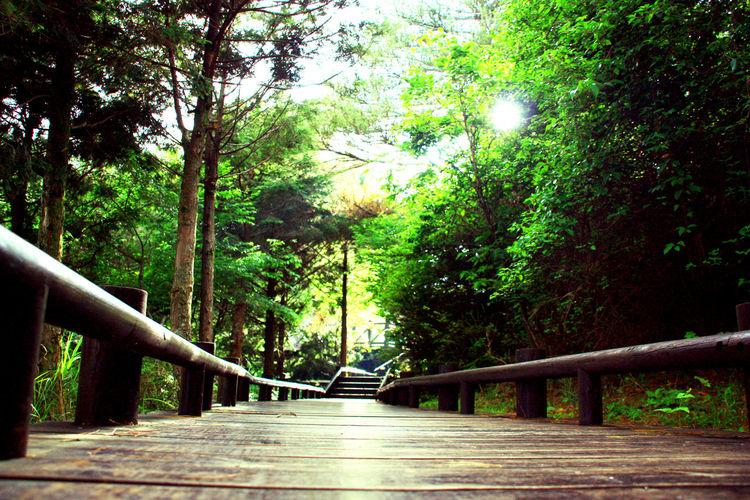 Forest Taiwan Taiwan Photographer 雪霸 森林 觀霧 步道 小徑 新竹 台灣