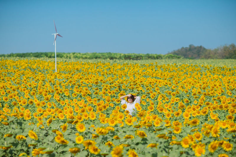 Woman standing amidst sunflowers against clear blue sky