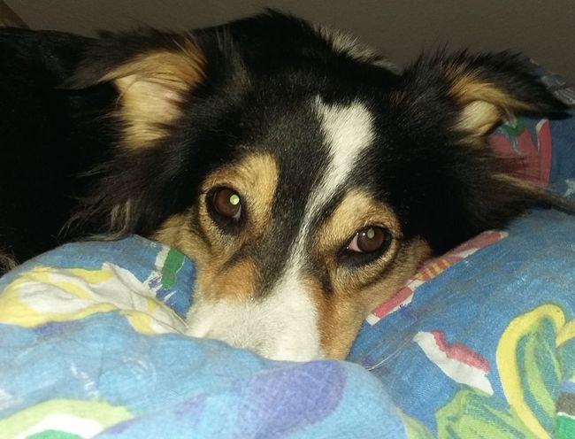 World Hugging Day Weltknudeltag Kuscheln  Hund Dog Animals Billerbeck